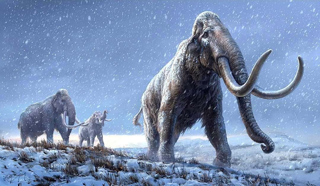 Siberian mammoths found with world's oldest DNA