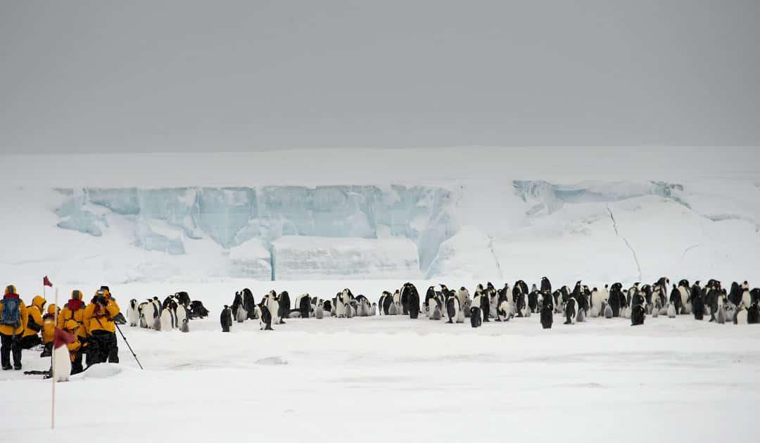 Wie gefährdet sind antarktische Tiere durch SARS-CoV-2?