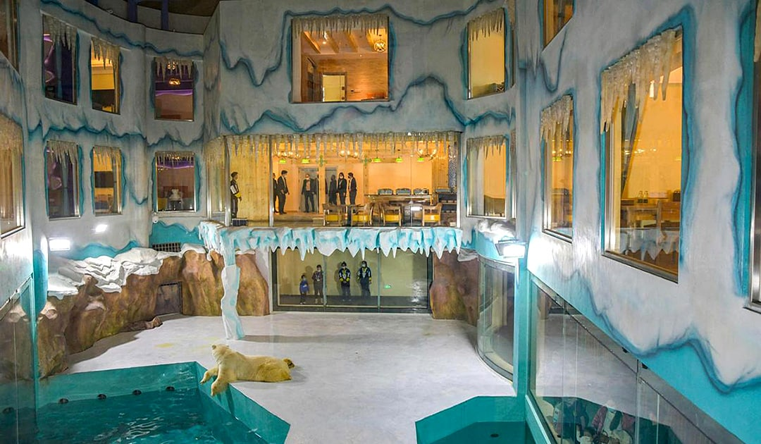Odd polar bear hotel opens in China