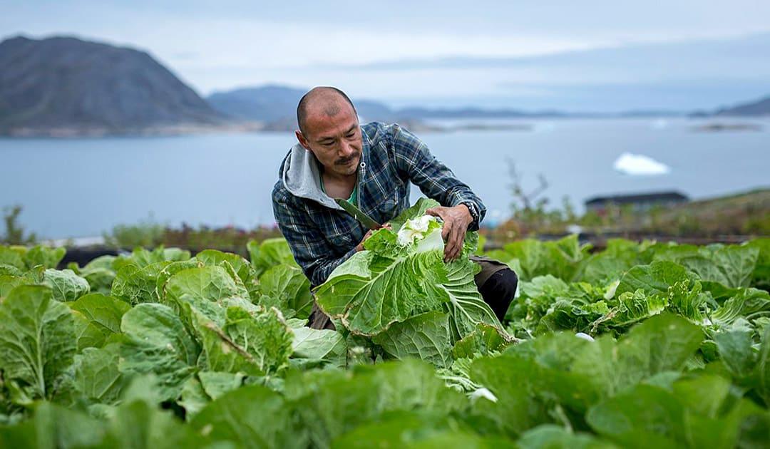 Landwirtschaft in Grönland