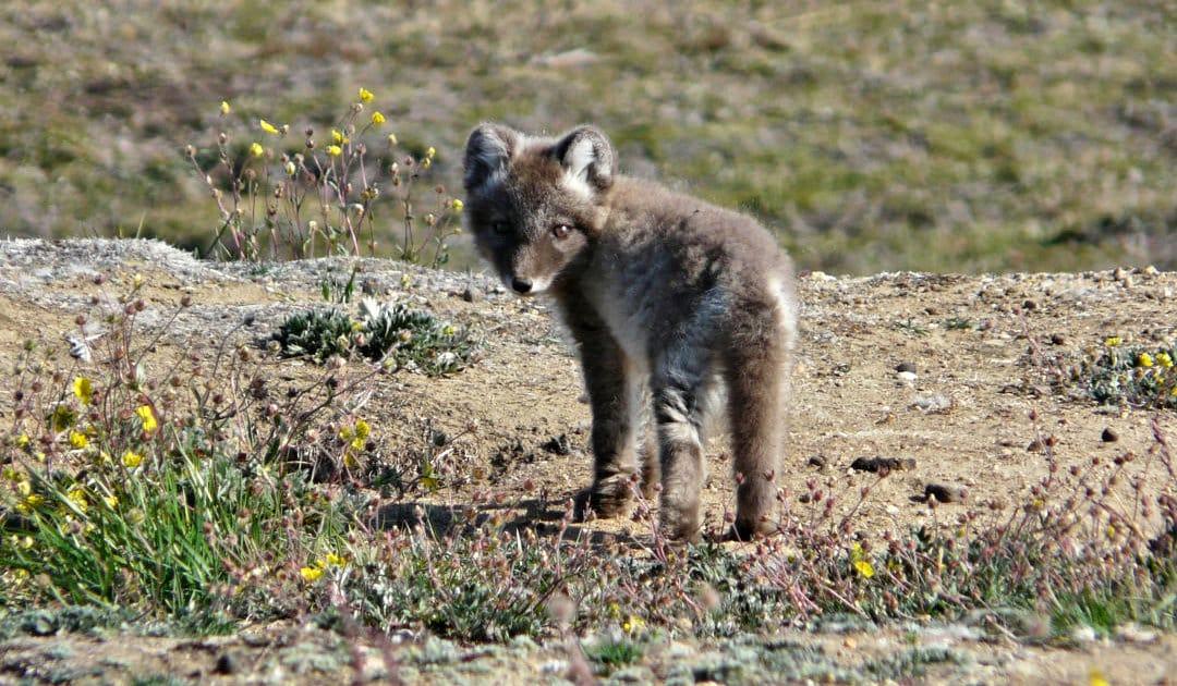 Frieden mit der Natur in einer erwärmenden Arktis?