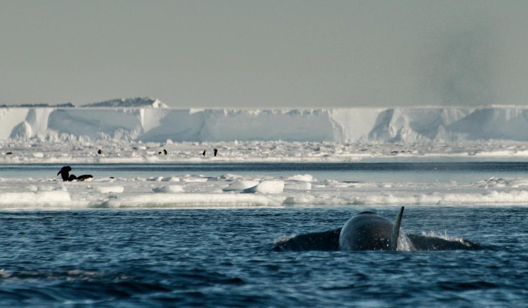 EU treibt Schaffung antarktischer Meeresschutzgebiete voran
