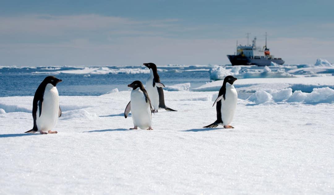 Fernsehtipp: Antarktika – Die gefrorene Zeit