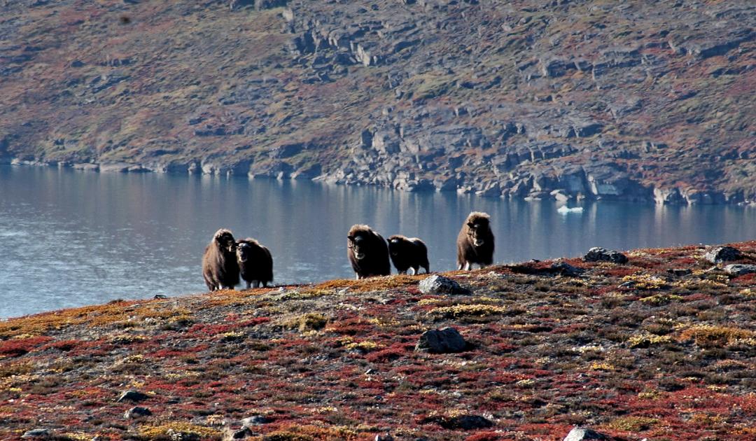 Bericht zur arktischen Vielfalt an Land ruft zu mehr Kooperation auf