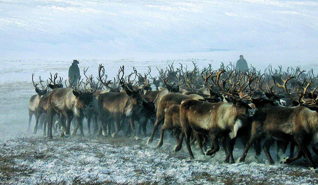 EU fördert Arktisprojekt mit 15 Millionen Euro