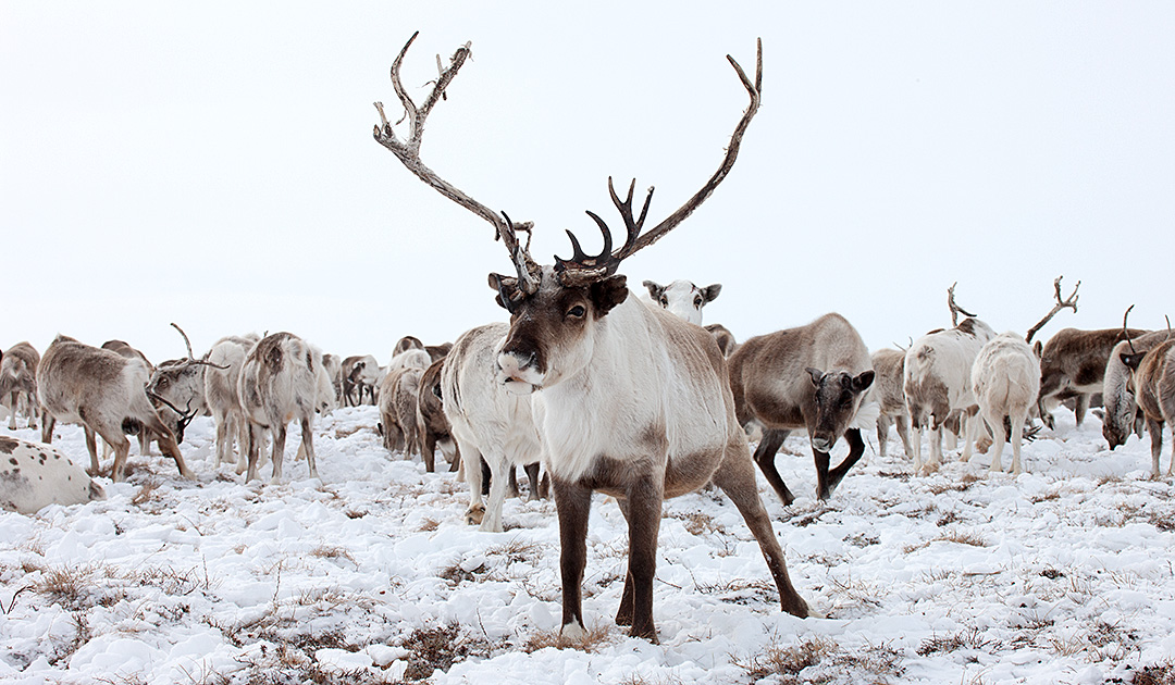 An appeal to Swiss banks from the Russian Arctic