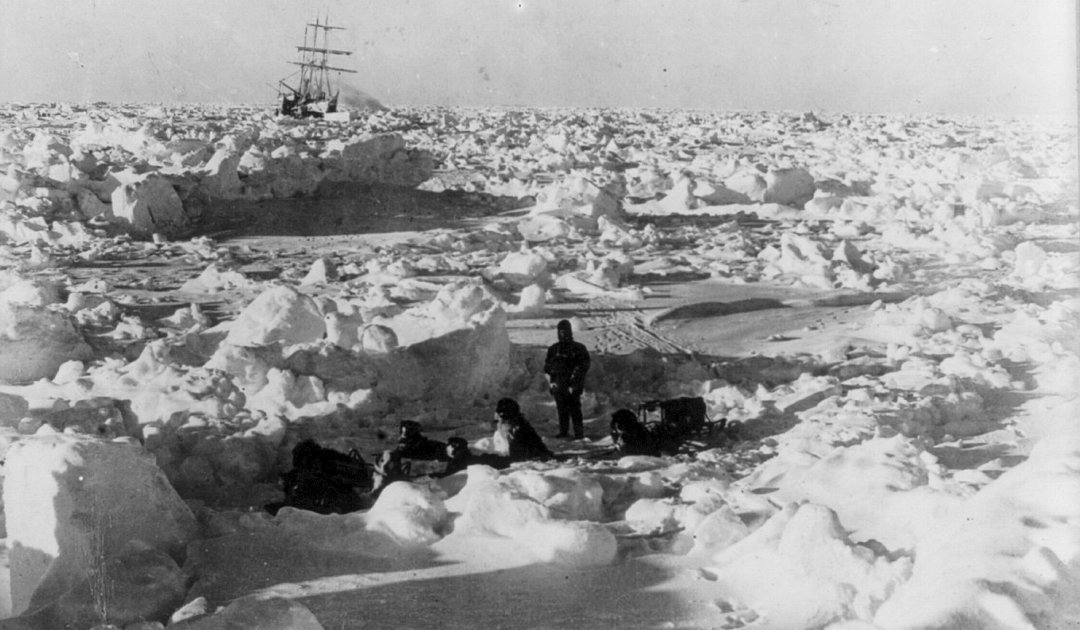 Antarktisforscher liessen Schlittenhunde hungern