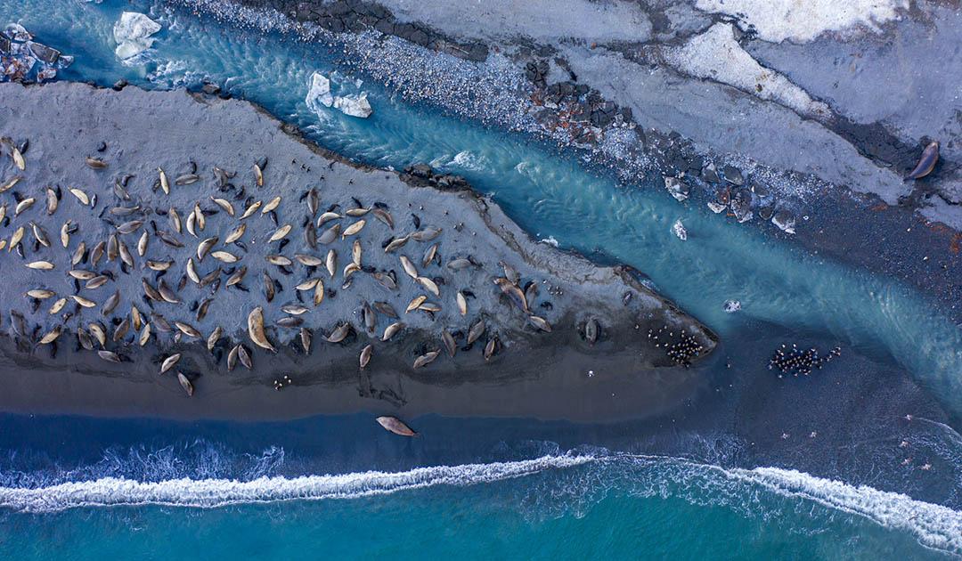 Tierzählung aus der Luft auf subantarktischen Inseln