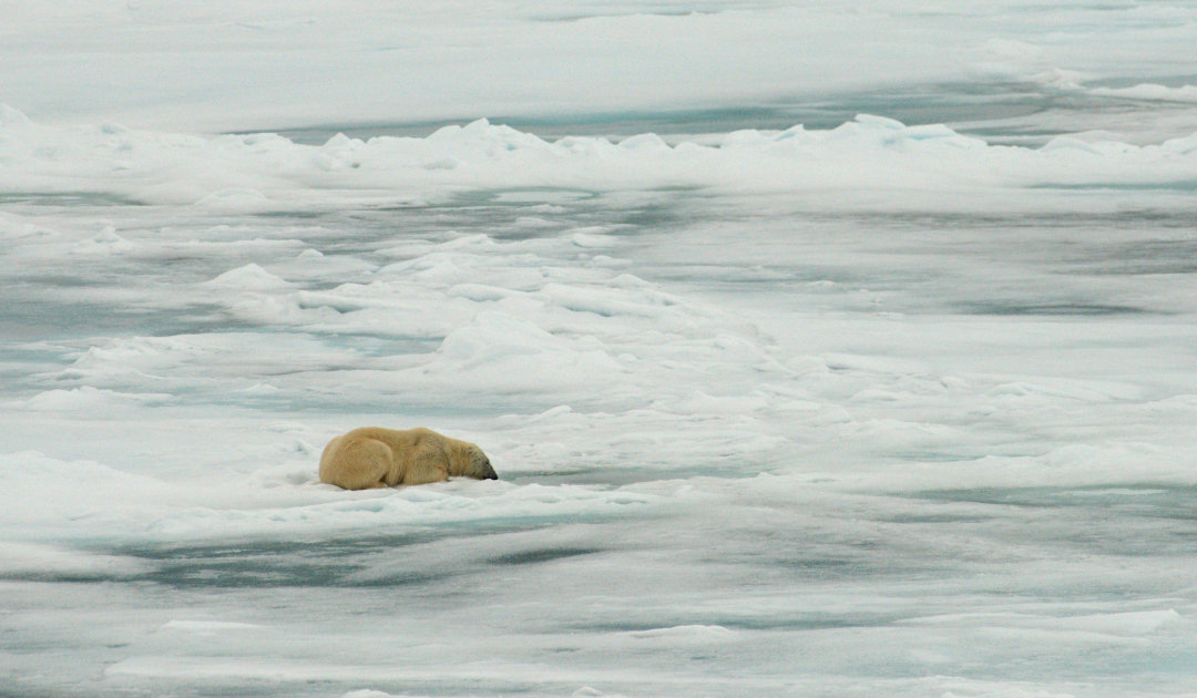 Are polar bears smarter hunters than previously thought?