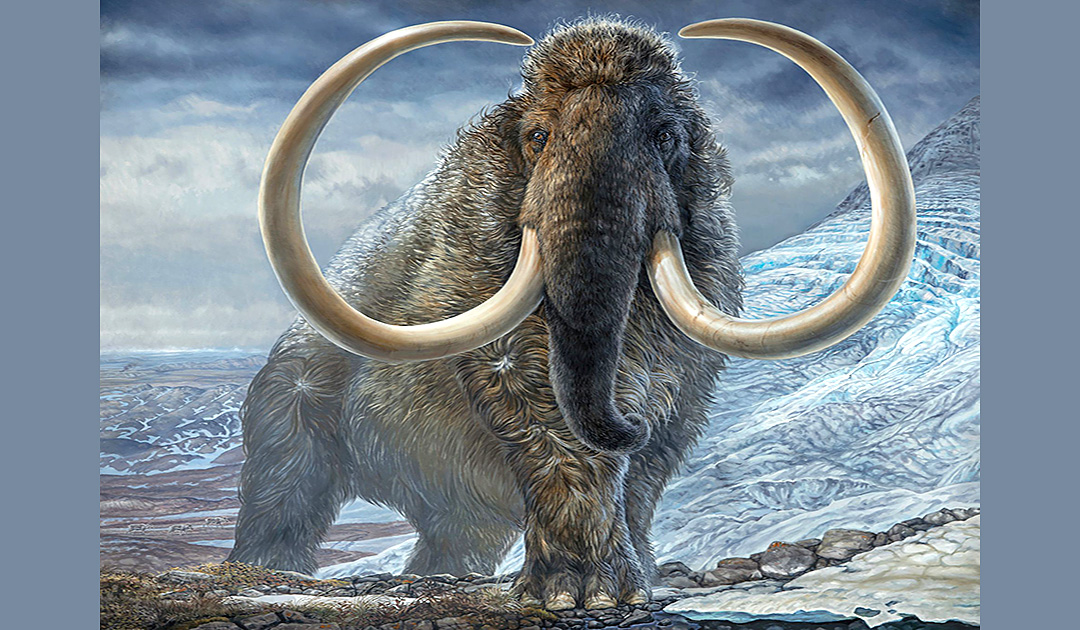 Study gives insight into the life of a 17,000-year-old mammoth
